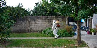trabajo contra el dengue
